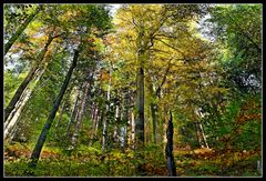 Strebsame Bäume
