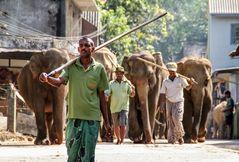 street Elefanten SLanka ca-21-.63-col +9Fotos