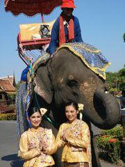 street Frauen Elefant Thai P20-20-coljpg