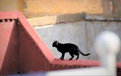 street Katze-1- Maroc-21-14-col +4Katzenfotos