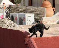 Street Katze-2- in Maroc Ca-21-016-col