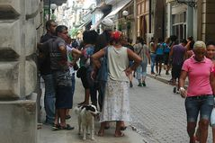 Street mit Hund