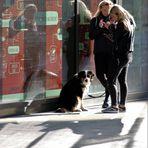 street ZWEI Hund Stgt ca-21-1098-col + 9Fotos
