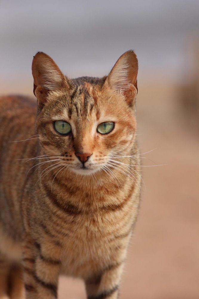 Streetcat 1