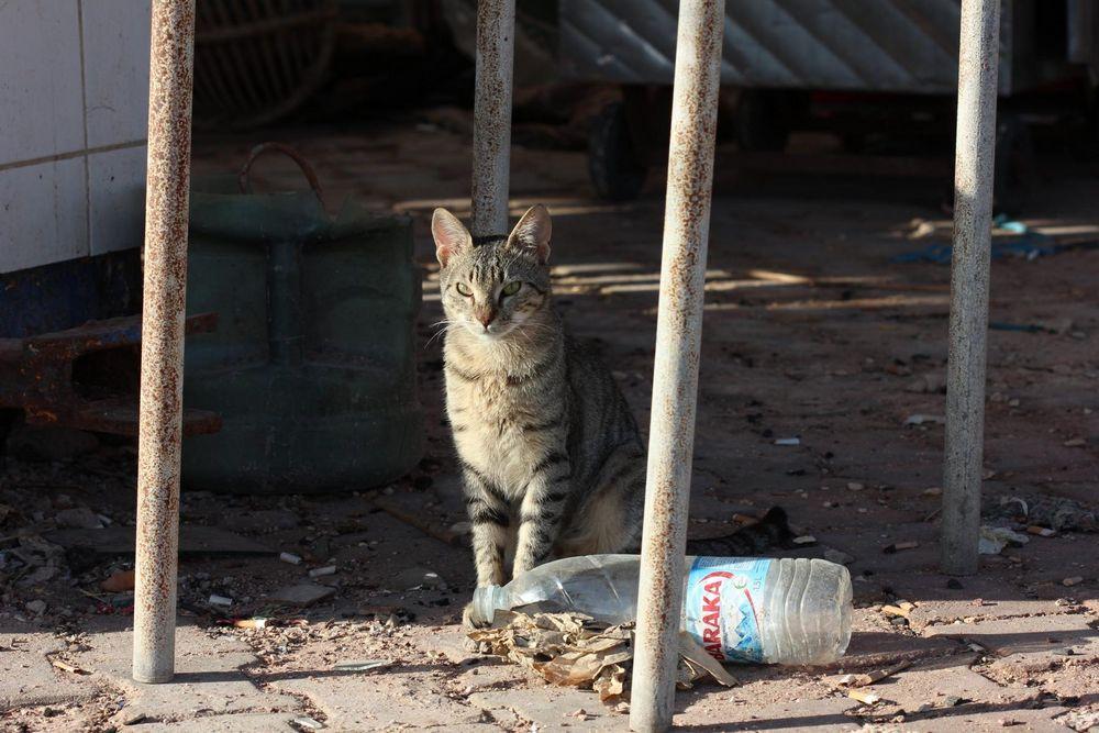 Streetcat 2
