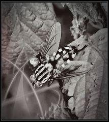 Streifenbluse mit Karorock