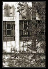 Streikende Fensterputzer ?