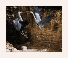 Streit am Teich