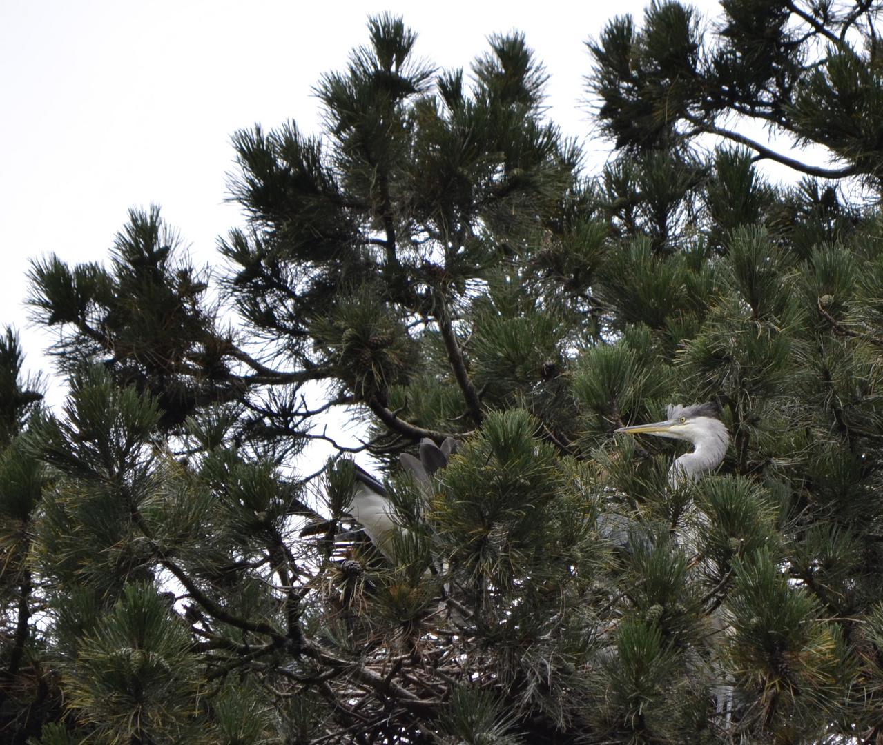 Streit ums Nest