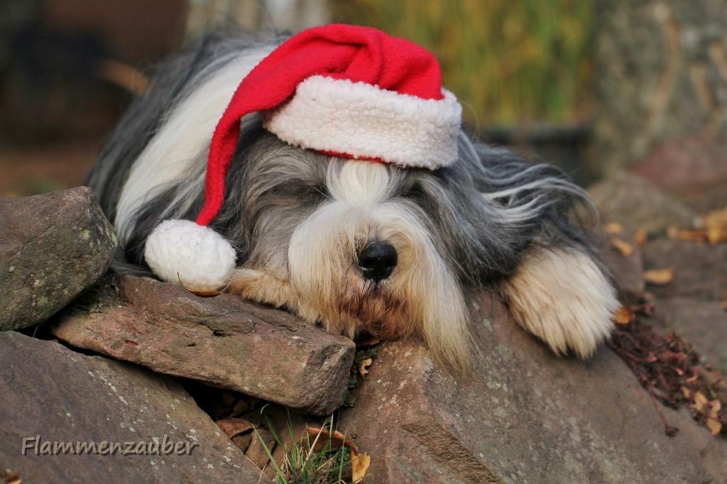 Stressfreie Vorweihnachtszeit!