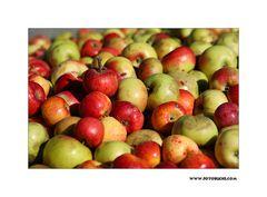 Streu Obst Ernte