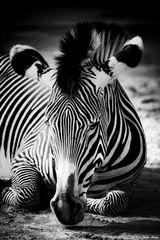 - striped -