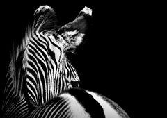 """""""stripes II"""""""