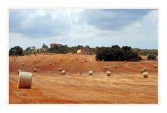 Strohrollenrennen auf Mallorca