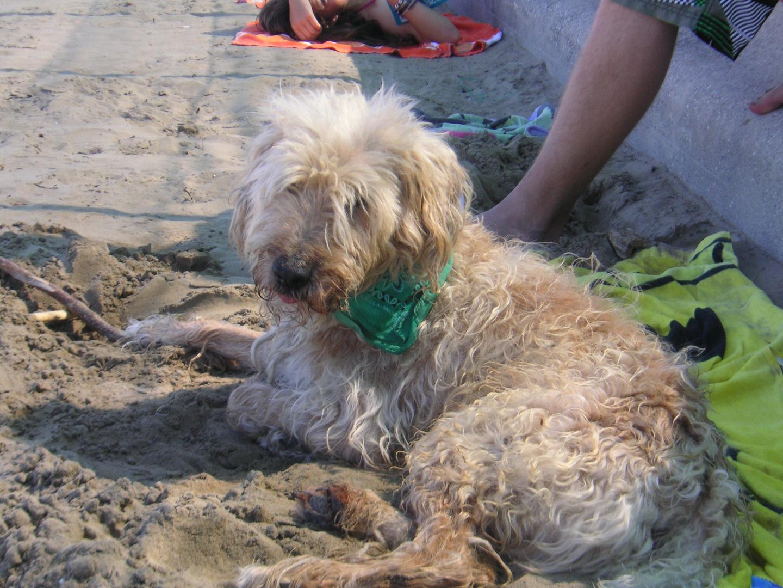 Strolch am Strand