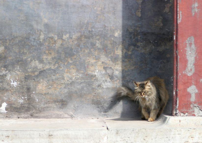 Stromer, Kater, Katze