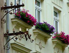 °°° Stromlose Blütenpracht in Meissen °°°