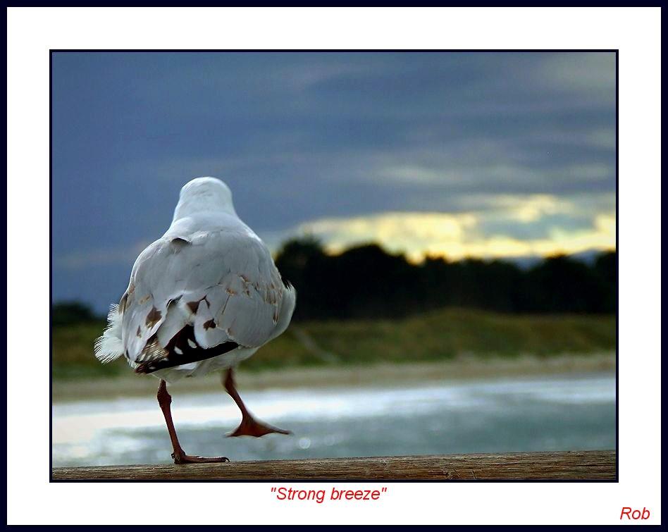 Strong breeze