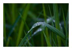 Struck in the Rain