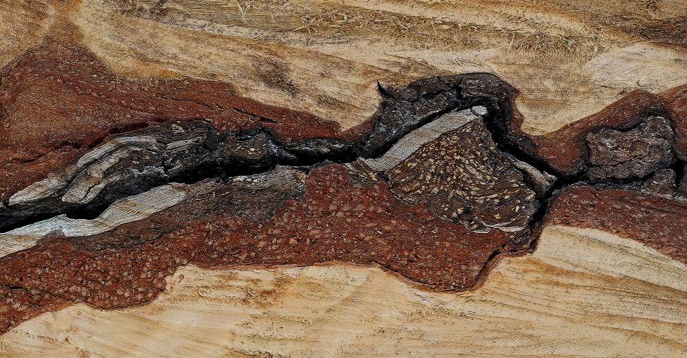 Strukturen im Brennholz, ein Brandkrustenpilz! * - Un fragment de bois scié, préparé pour le feu ..!