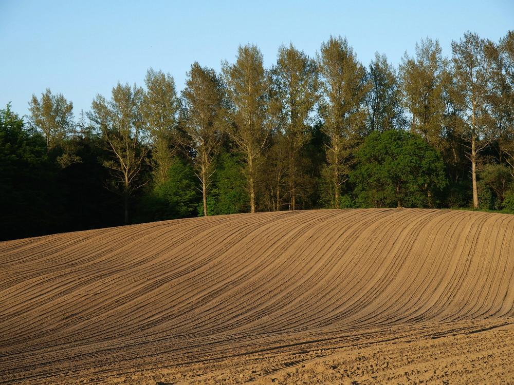 Strukturierte Landschaft