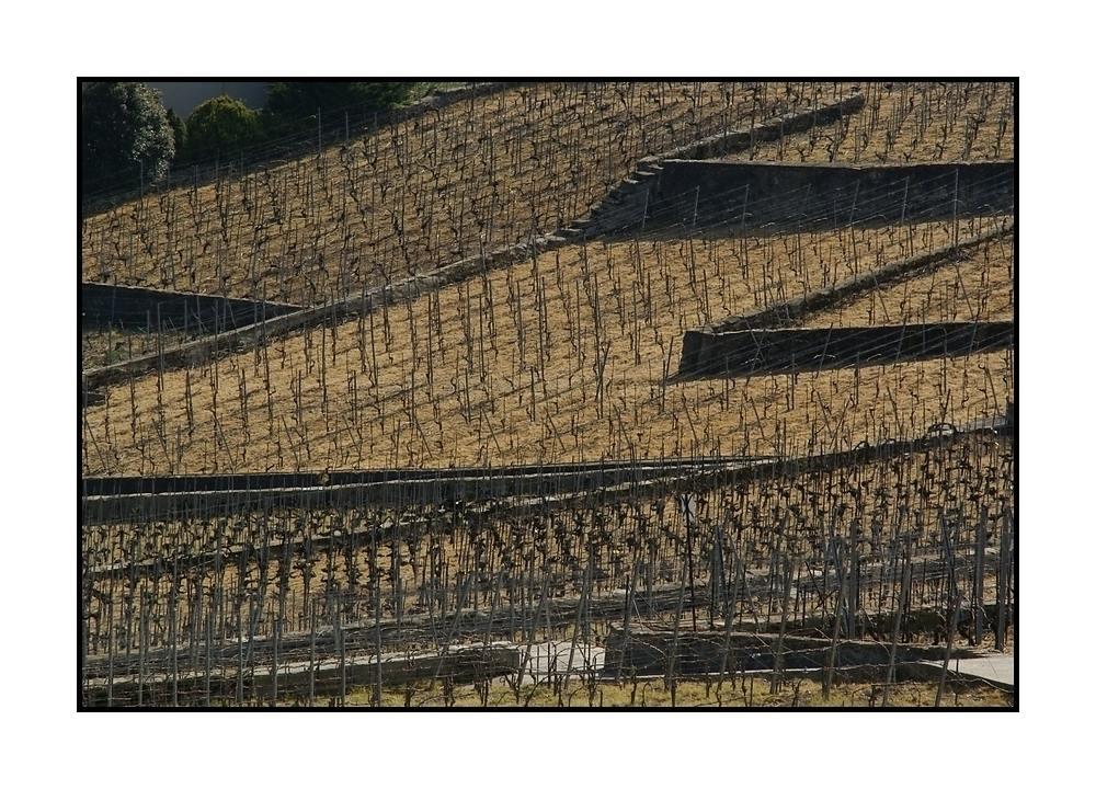 strukturierter Wein-Anbau