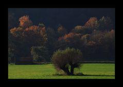 Struwwelige Weiden-Köpfe - oder: ...die Außen-Seiter...