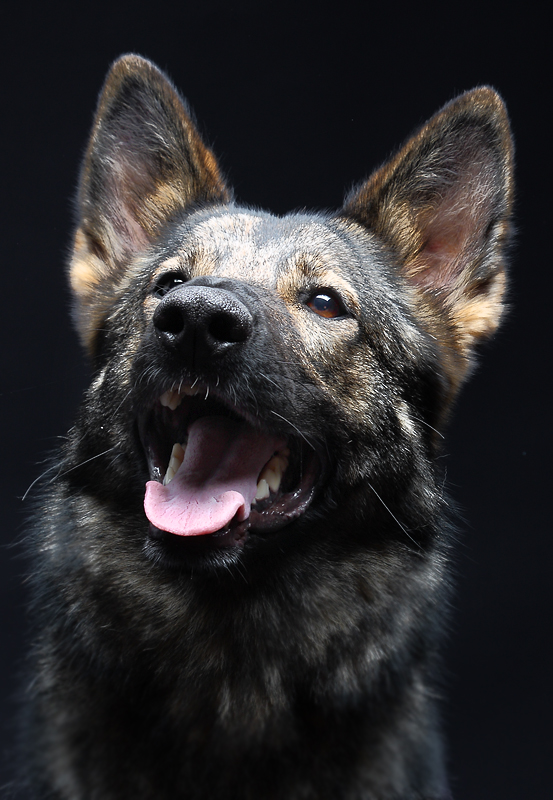 ~Studiohund~