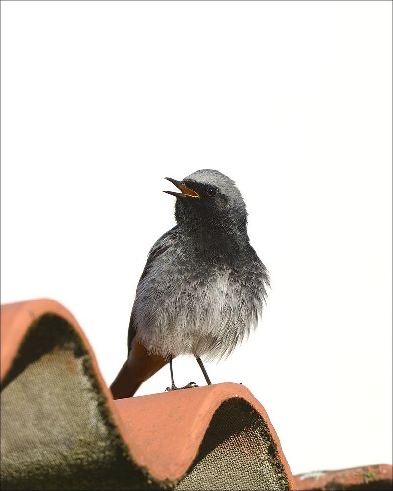 Stunde der Gartenvögel 2
