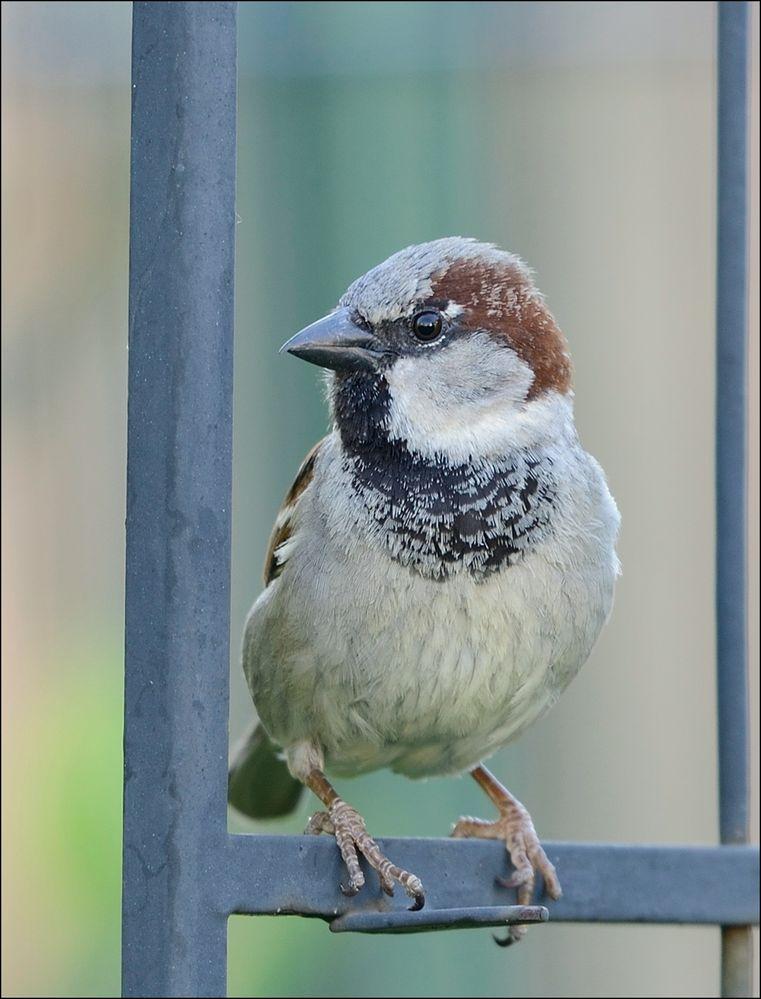 Stunde der Gartenvögel 3