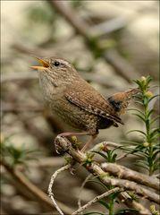 Stunde der Gartenvögel 4
