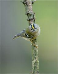 Stunde der Gartenvögel 6