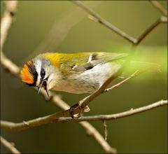 Stunde der Gartenvögel 7