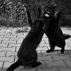 Stunt - cats