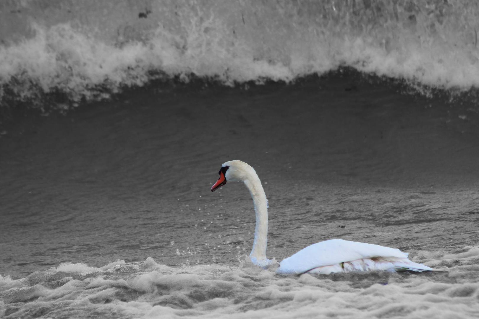Sturm auf dem Gardasee
