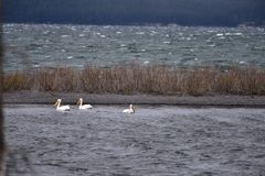 Sturm auf dem Yellowstone Lake             DSC_5190