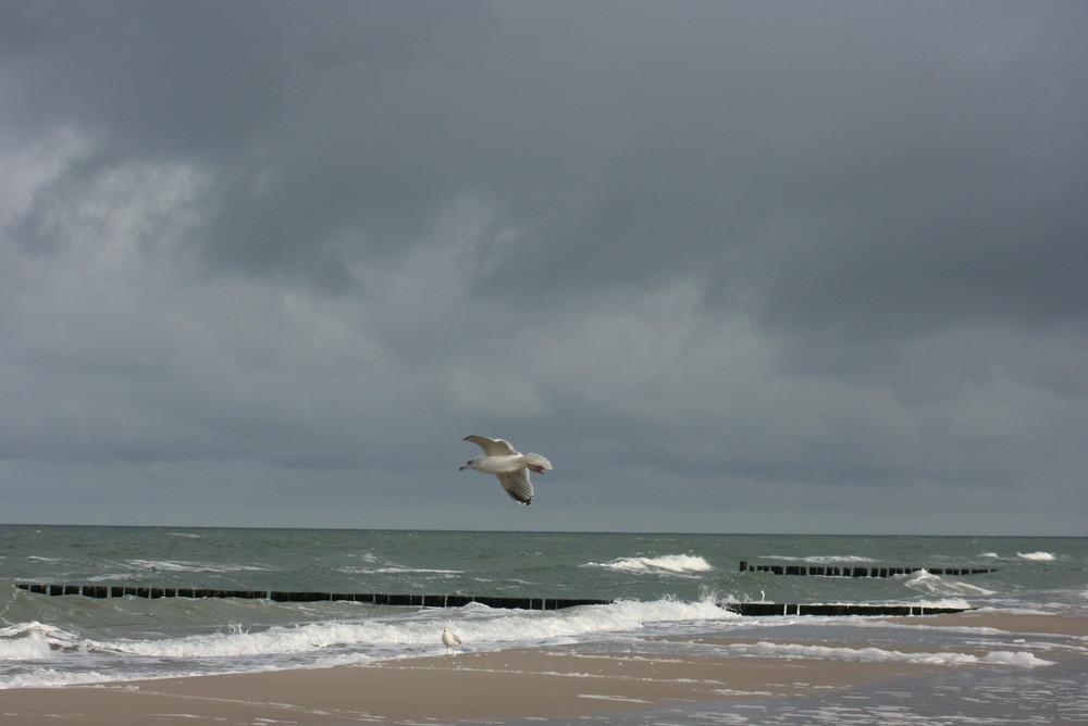Sturmflug