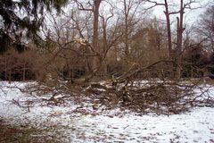 Sturmschaden durch Sturm Xynthia im Schlossgarten 01