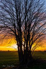 SU mit Baum