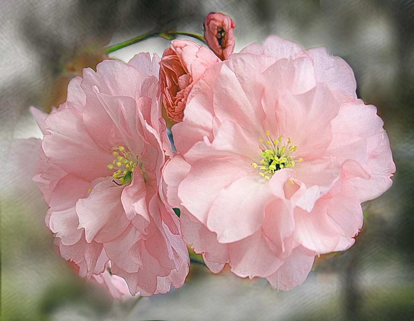 Suave anticipo primaveral
