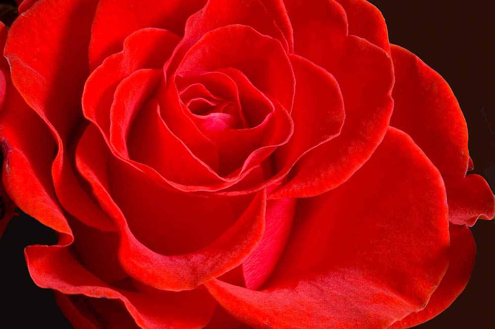 Sub rosa dictum
