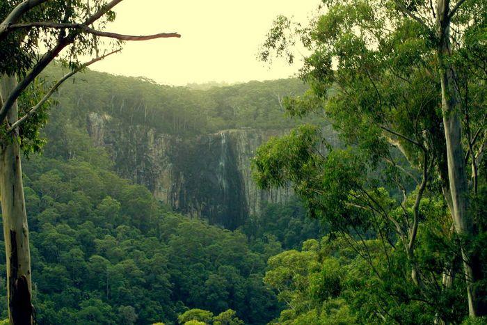 Subtropischer Regenwald in Australien