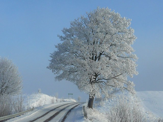 suburban area in winter