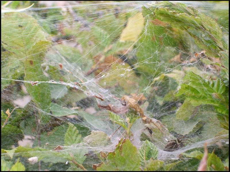 Suche die Spinne, oder sie findet dich!