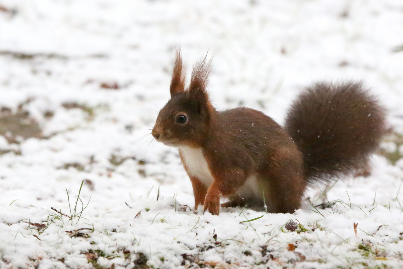 Suche im Schnee