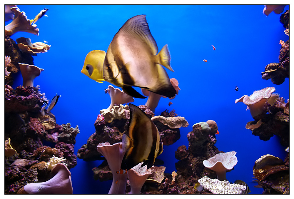 Sucht Nemo :-)