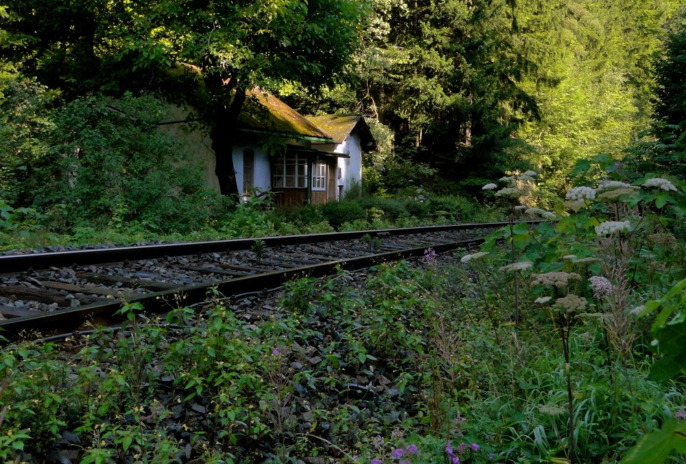 Sudety - Sommer 04 ... im Wald