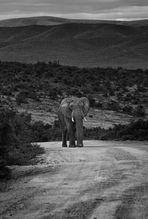Südafrika / Addo Elephant Park