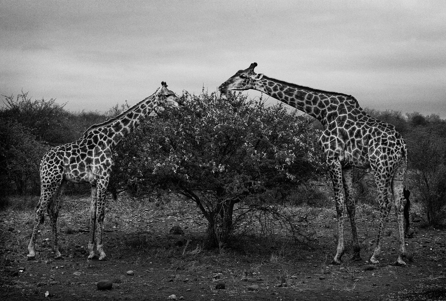 Südafrika / Kruger