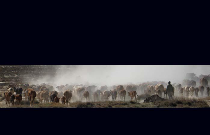 südafrikanischer Rinderstripe